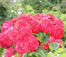 rosy-klimenko4