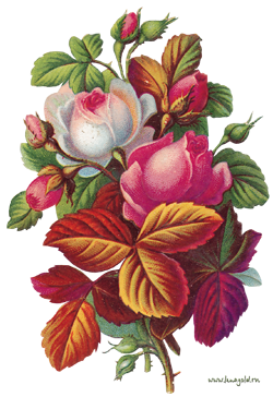 Удобрения для роз. Азот