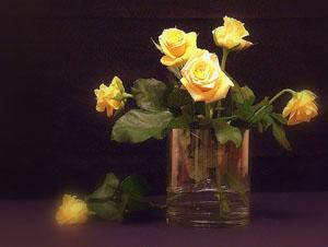 Удобрение роз. Калий