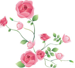 Строение привитой розы