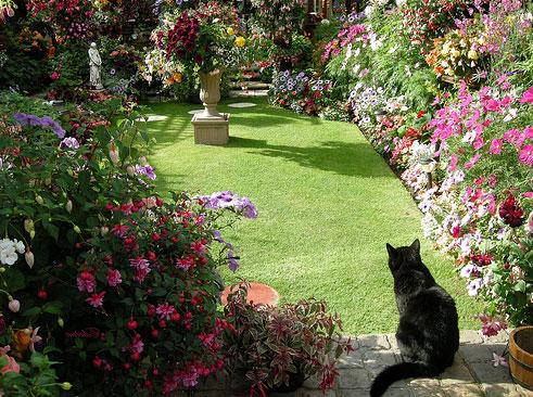 Как сформировать сад непрерывного цветения