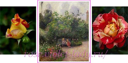 Пестрая роза Camile Pissarro