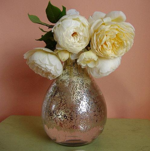 Белая английская роза Клэр Остин