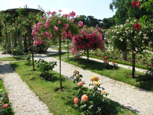 Розовый сад Val di Marne