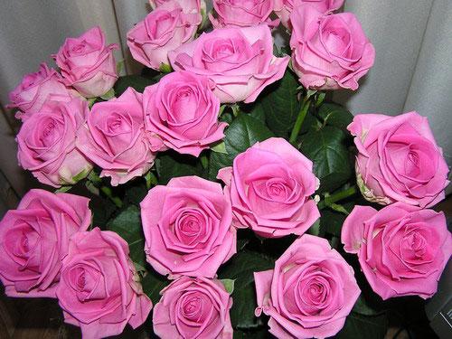 Розовая роза Аква