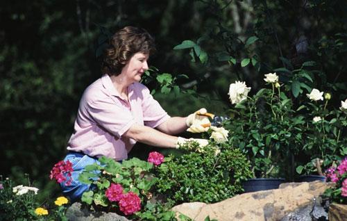 Как ухаживать за цветниками
