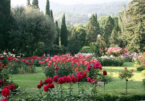 Розарий Никитинского ботанического сада