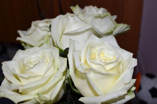 факты из истории появления розы