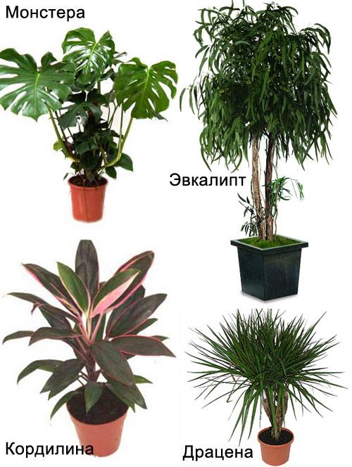 полезные растения для спальни