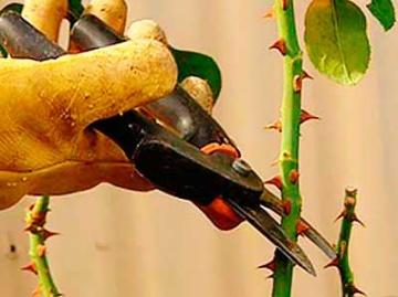 Как часто нужно точить садовый инвентарь