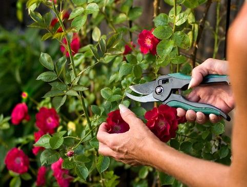 Уход за садовыми инструментами