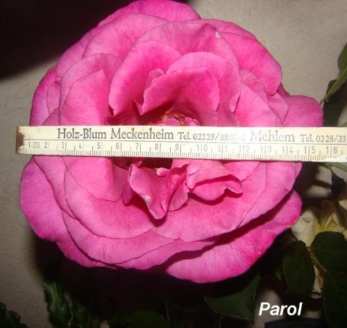 Чайно-гибридная роза Рarole