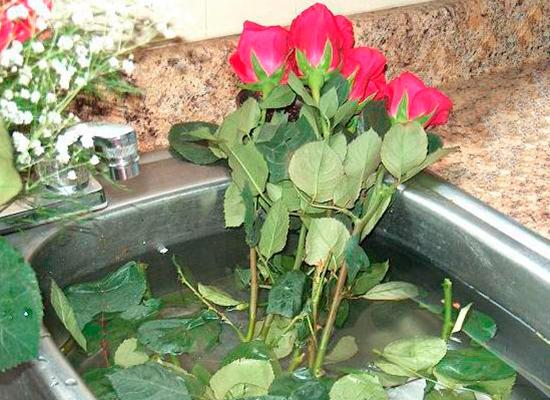 Как сделать чтобы розы. дольше стояли 75